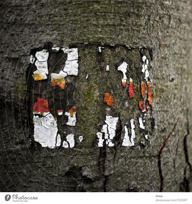 geheimnisvoll | Rätselspaß im Gimritzer Park Pflanze Baum Baumrinde Zeichen Schilder & Markierungen Hinweisschild Warnschild kuschlig Design Erwartung Idee
