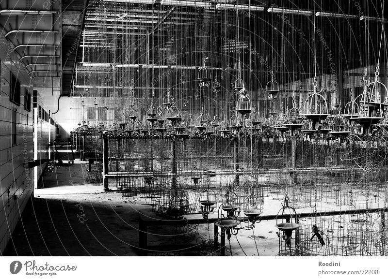 Kaue alt Einsamkeit Arbeit & Erwerbstätigkeit Angst Industriefotografie Fabrik gruselig schäbig Lagerhalle Geister u. Gespenster Topf vergessen Ruhrgebiet