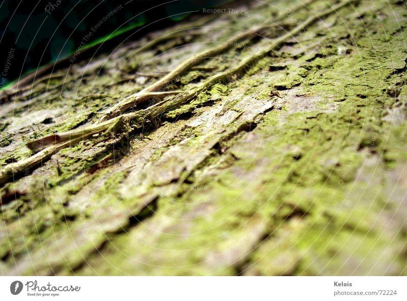 Baum ohne Tagescreme Baumrinde Zeit microcosmos insektenperspektive Haut Natur