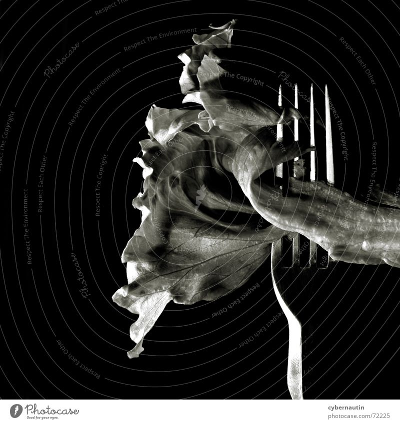 Eisbergsalat (Variante) Metall Ernährung Küche Salat Gabel Vegetarische Ernährung Besteck aufgespiesst