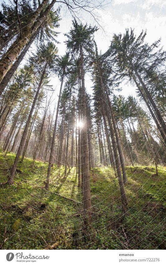 tiefster Schwarzwald Himmel Natur Ferien & Urlaub & Reisen Pflanze grün Baum Landschaft Wald Berge u. Gebirge Gras hell Wetter Wachstum hoch Ausflug Baumstamm