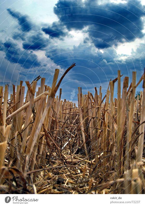 Nach der Ernte Himmel Sommer Wolken dunkel Regen Feld klein Wetter nass Erde gefährlich Boden Bodenbelag bedrohlich Klima Blitze