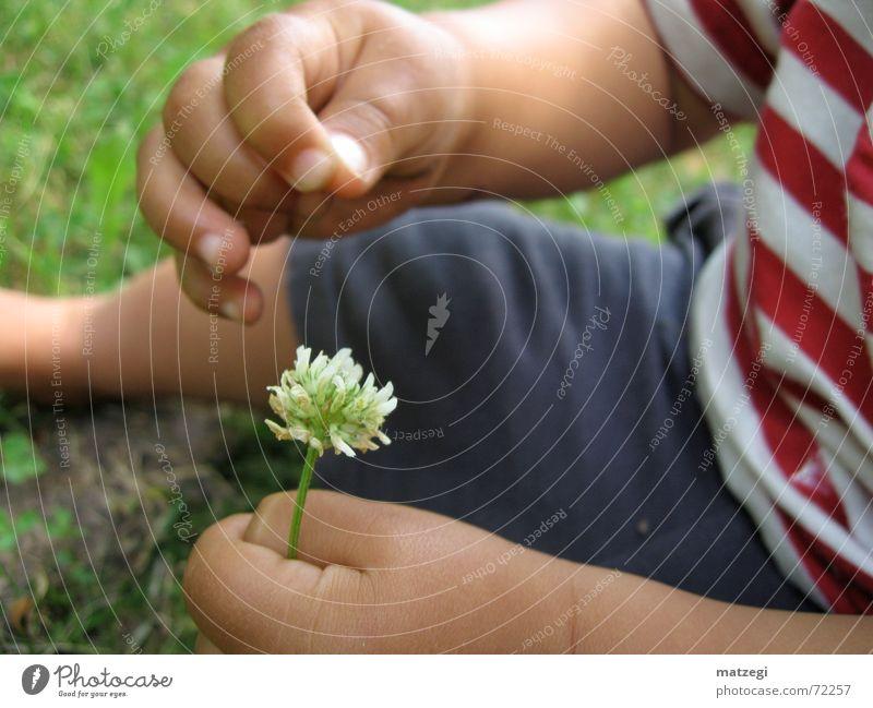 Flower Power Kind Natur Blume Sommer Junge Wiese Blüte Frühling Garten