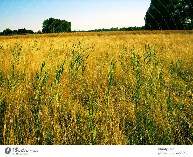 Durchwachsen Himmel blau grün Baum Sommer Gras Wärme hell Arbeit & Erwerbstätigkeit Feld Horizont fliegen Ausflug verrückt Wachstum Europa