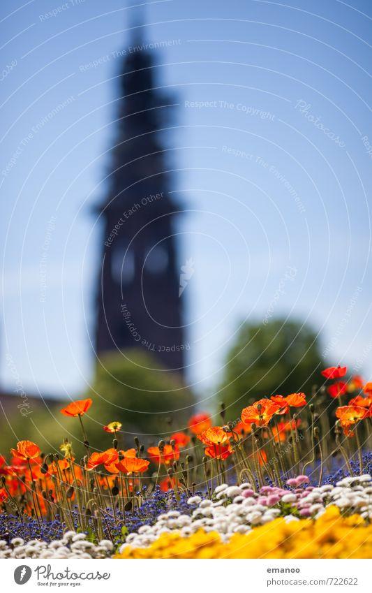 Freiburgfrühling Ferien & Urlaub & Reisen Tourismus Städtereise Natur Himmel Frühling Pflanze Blume Blüte Topfpflanze Stadt Stadtzentrum Kirche Dom Park Turm