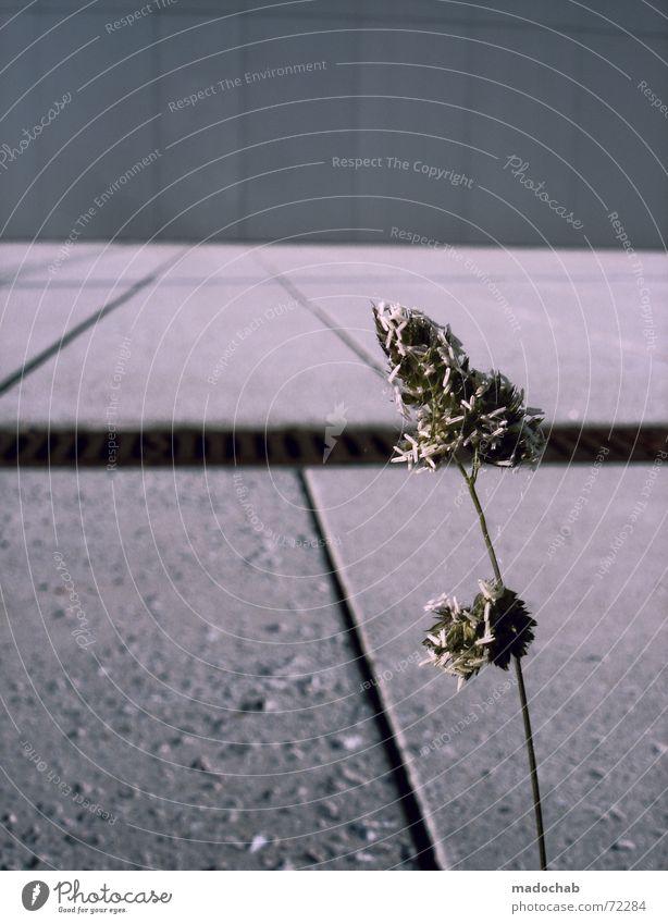 GROW! | pflanze trist einsam stadt alleine single kraft hoffnung Natur Stadt Pflanze Blume Einsamkeit Freude Ferne dunkel Leben grau Stein Linie Wachstum Beton
