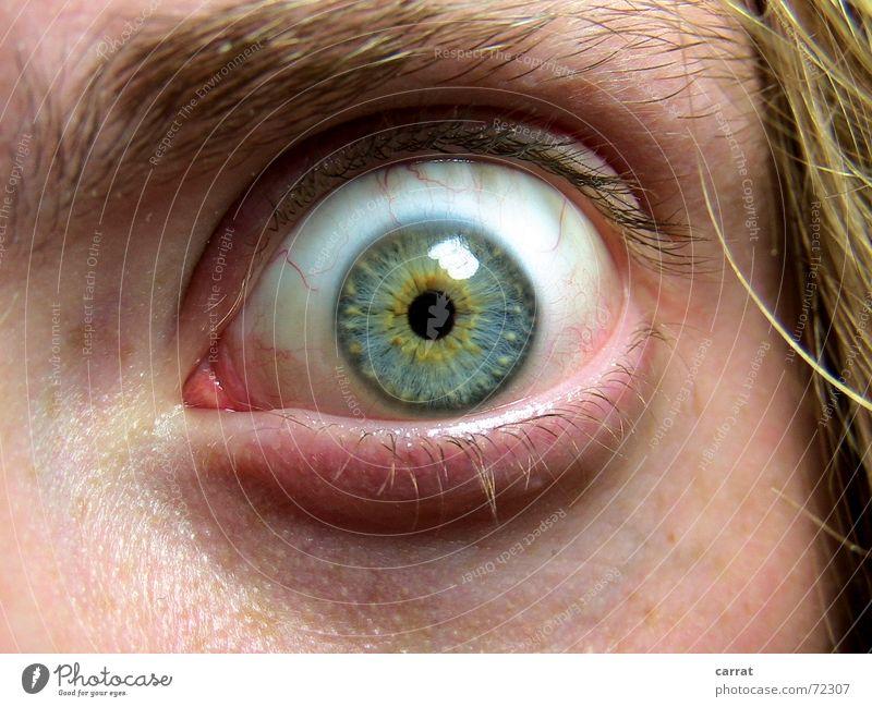 EviL EyE N°1 Schock gruselig Panik Kontaktlinse Pupille Licht Gefäße Mann Wimpern Augenbraue blond Rauschmittel Entzug Respekt Angst Blick Haare & Frisuren Haut
