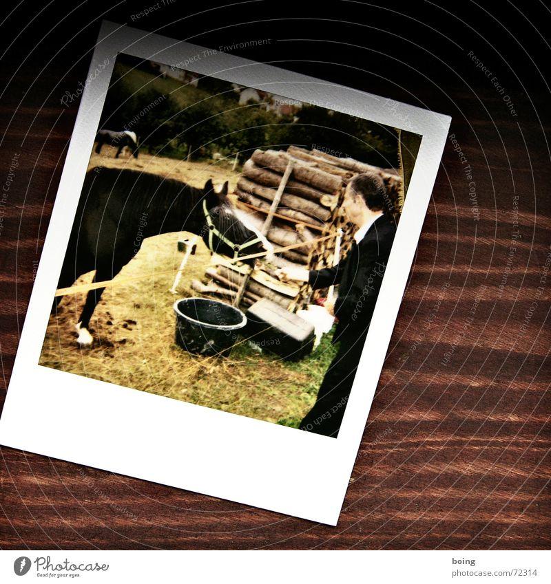 zett beim Pferde stehlen Wiese Weide Bauernhof Landwirtschaft Säugetier füttern Western Polaroid Almosen Holzstapel Reiterhof Streichelzoo Pferderennen