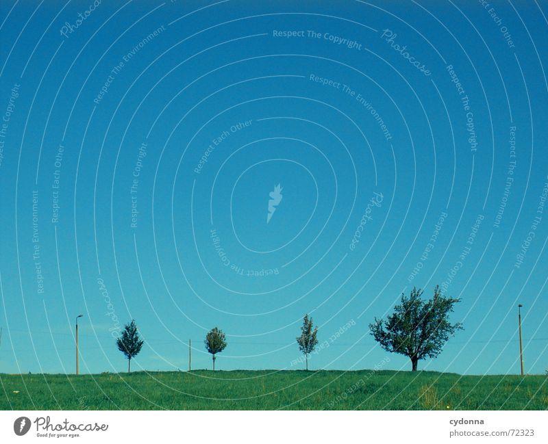 """Der Baum, das olle """"Herdentier""""... Himmel Natur Baum Sommer Wiese Wachstum Reihe Allee Lücke minimalistisch"""