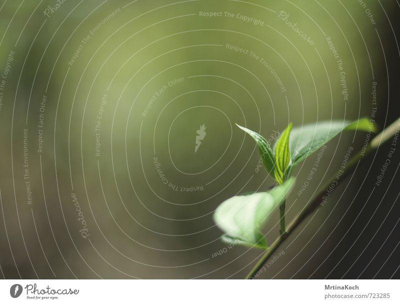 hallo erstmal. Umwelt Natur Pflanze Frühling Sommer Gras Sträucher Blatt Grünpflanze Nutzpflanze Park Wald Freude Glück Optimismus Erfolg Kraft sprießen