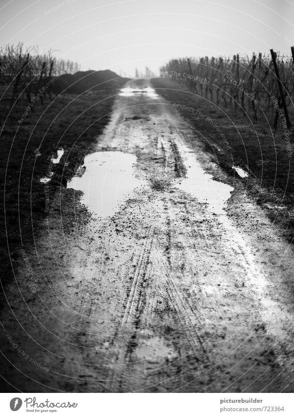Bonjour Tristesse Weinbau Landschaft Erde Wasser Herbst Winter schlechtes Wetter Regen Feld Weinberg Menschenleer Wege & Pfade außergewöhnlich dunkel trist