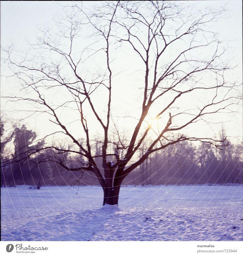 Abkühlung Garten Kunst Natur Landschaft Winter Klima Eis Frost Schnee Baum Park Wiese frieren glänzend leuchten ästhetisch kalt nachhaltig natürlich trashig