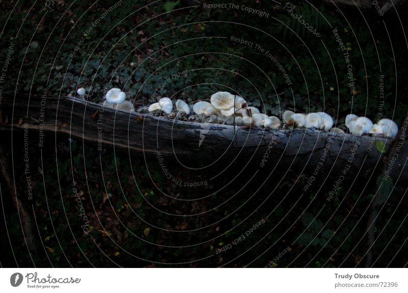 """""""we'll take some titanium white - look at this beautiful white"""" Natur Baum Wald Landschaft Holz Linie Wachstum Bodenbelag Amerika Pilz Schimmelpilze entstehen"""