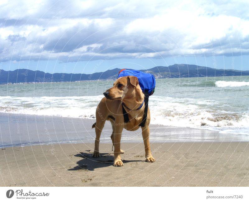 muffin allein im urlaub Hund Strand Meer Ferien & Urlaub & Reisen Wellen Spanien Rucksack Mischling Tier Horizont Wolken stehen Himmel Berge u. Gebirge Sand