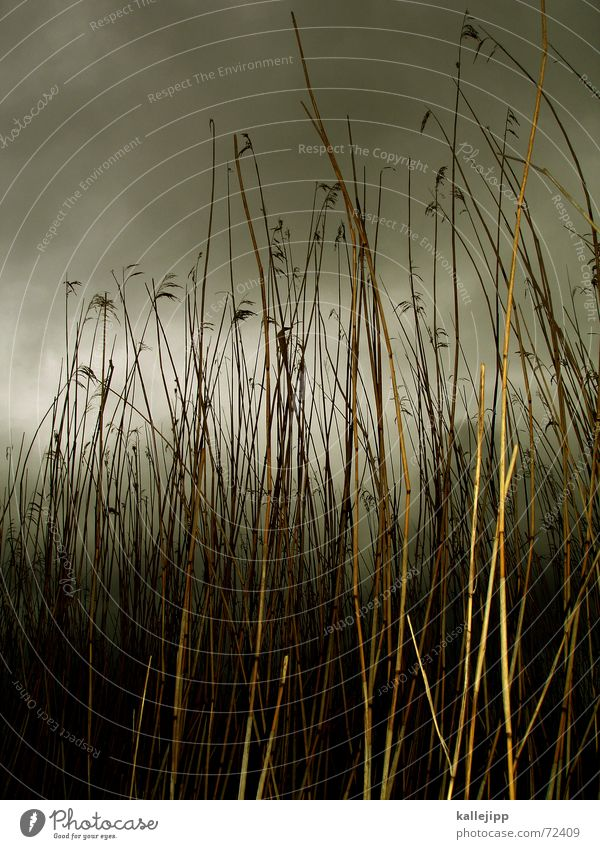 ab durch die hecke Natur Meer Wolken Gras Regen Landschaft Sturm Schilfrohr Unwetter Teich Nationalpark Moor Röhricht
