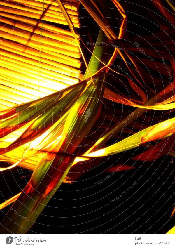 Lichteffekt Pflanze Rollo Physik Stil rund Raum Palme Blatt Design gelb grün schwarz Schatten Wärme Häusliches Leben Natur Strukturen & Formen Kunst