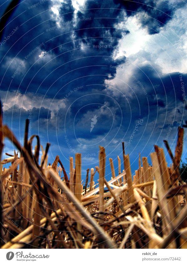 Noch mehr Untergang.... untergehen Feld Stoppel Wolken Unwetter geschnitten Stroh Halm dunkel weiß braun Fetzen Himmel brennen blau Ernte Erde blue sky clouds