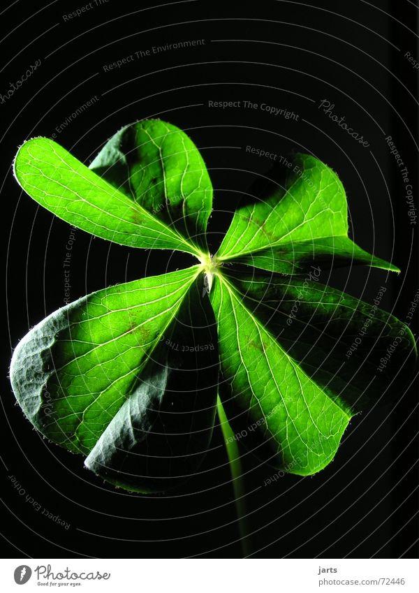 Glück... grün Religion & Glaube Zufriedenheit Hoffnung Wunsch Sehnsucht Klee Glückwünsche Glücksklee