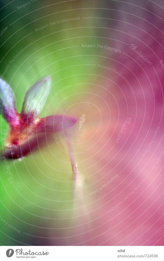 Farbflash Natur grün Farbe Pflanze Sommer Umwelt Wiese Frühling Blüte Garten rosa Lebensfreude Rausch Farbenspiel Farbverlauf leuchtende Farben