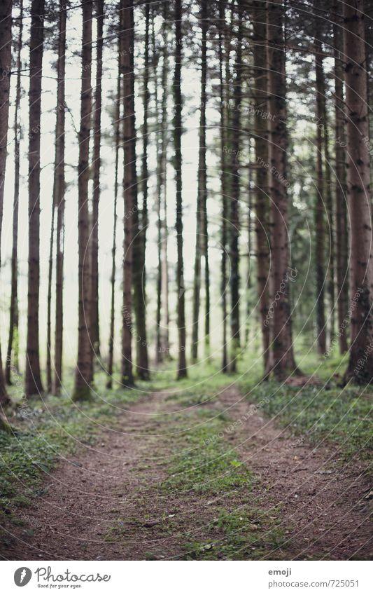 Wald Natur grün Pflanze Sommer Landschaft Umwelt natürlich Fußweg