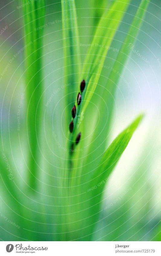 aufgereiht Natur Pflanze Frühling Gras Blatt Grünpflanze Wildpflanze weich blau braun grün Samen Farbfoto Gedeckte Farben Außenaufnahme Nahaufnahme