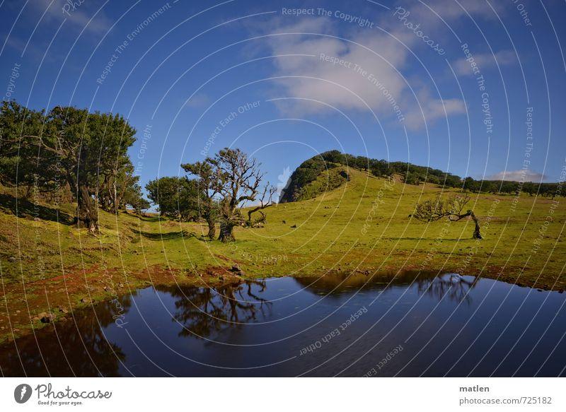 Weideland Natur Landschaft Pflanze Himmel Wolken Frühling Wetter Schönes Wetter Baum Gras Wiese Wald Hügel Berge u. Gebirge blau grün Farbfoto Außenaufnahme