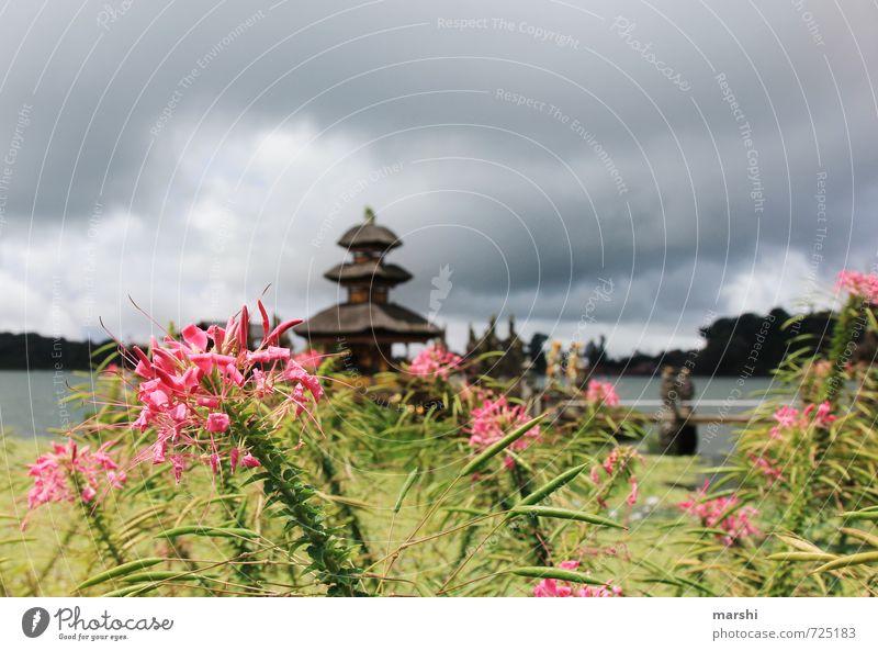 lovely Bali Freizeit & Hobby Kunst Natur Pflanze Sommer Klima Gefühle Reisefotografie Asien Tempel Wolken See wassertempel Blume Reiseroute Bratan See