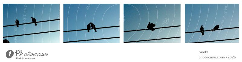 TurtletaubLOVEstory Himmel oben hoch Geschwindigkeit rein machen aufwärts Taube Tier Baugerüst Stab himmelblau Brunft