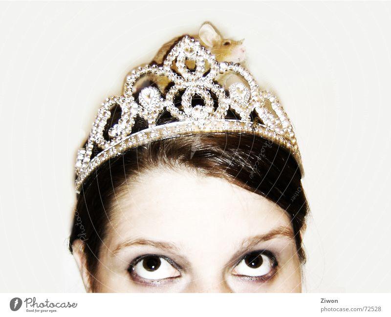 Mäuse Prinzessin Tier Kopf reich Neugier Reichtum entdecken Maus Baumkrone König Prinzessin Blick nach oben Hausmaus Vor hellem Hintergrund