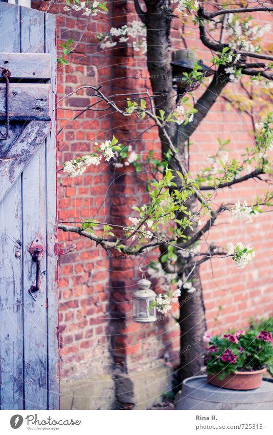 Kirschblüte Baum Blume Mauer Wand Tür authentisch Kirschbaum Pelargonie Windlicht Holztür Backsteinwand Landleben Stillleben Farbfoto Außenaufnahme Menschenleer
