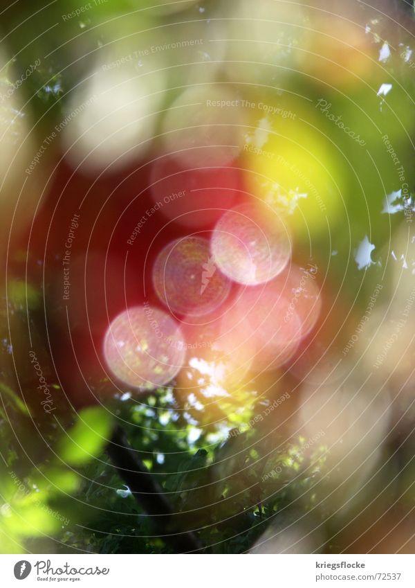 *bling* Natur grün rot Blatt gelb Kreis Punkt Licht mehrfarbig