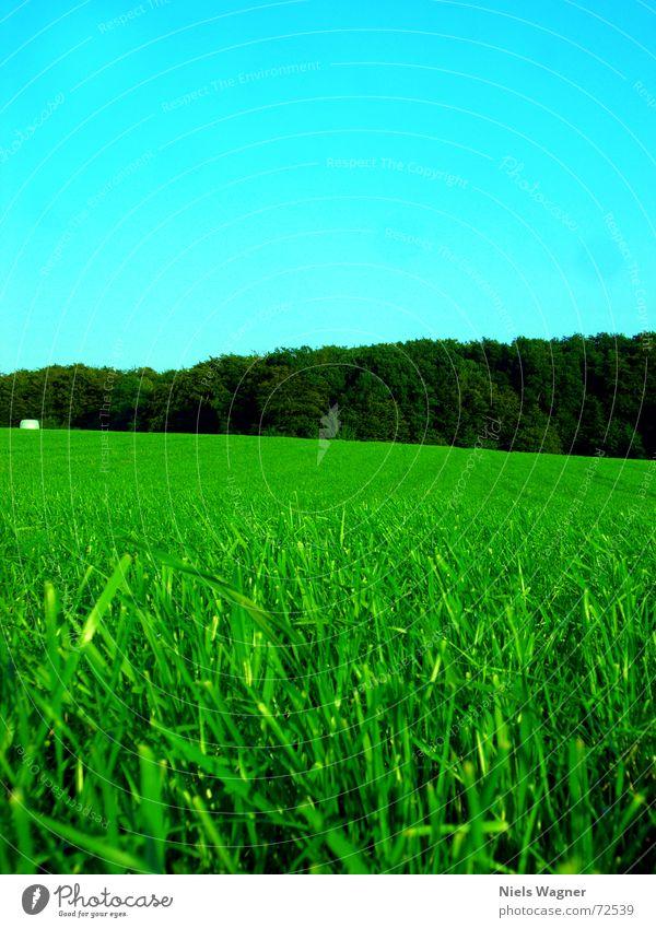 Blattgrün überall 2 Wiese Heuballen Gras Feld ruhig Baum Wald Waldlichtung rund Sonnenlicht Wolken Statue Himmel Kugel Schatten Lichterscheinung Perspektive