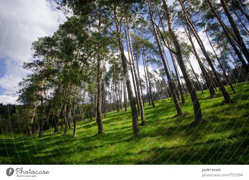 einwandfrei Natur Leinleiter Himmel Wolken Frühling Schönes Wetter Baum Wiese Wald Hügel Fränkische Schweiz frisch natürlich Wärme braun grün Zufriedenheit