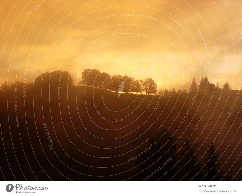 Märchen Wald Wolken Nebel Baum Abenddämmerung Dämmerung Sonnenuntergang außergewöhnlich Himmel orange Verhext Brand
