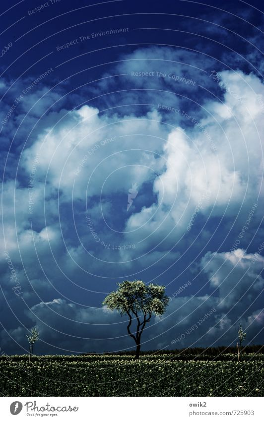 Einzelkämpfer Himmel Natur Pflanze blau Baum Einsamkeit Landschaft Wolken Umwelt Blüte Frühling Wiese Gras Horizont Wetter Wachstum