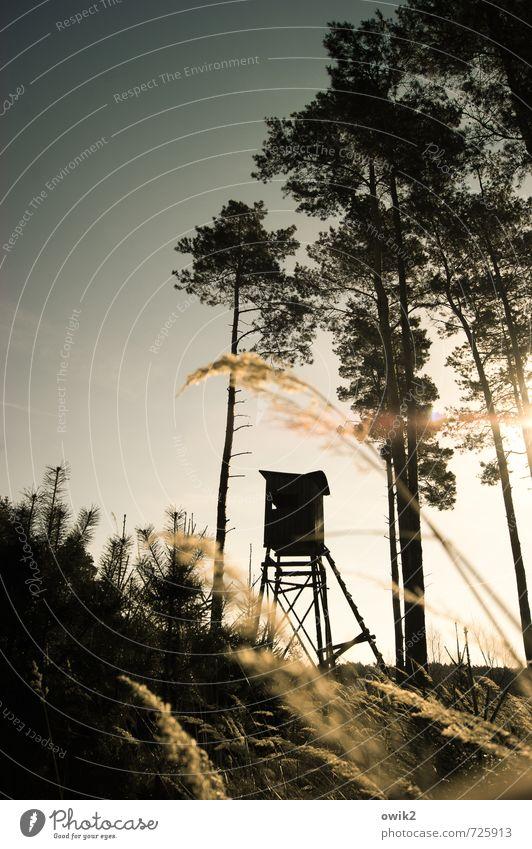 Schießstand Jagd Umwelt Natur Landschaft Pflanze Wolkenloser Himmel Frühling Klima Wetter Schönes Wetter Baum Gras Sträucher Kiefer Nadelwald Hochsitz Holz