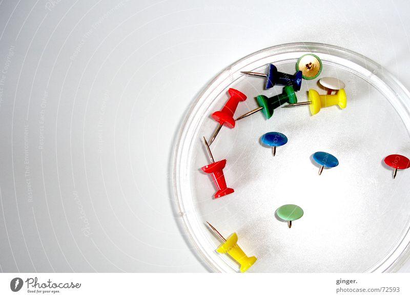 """""""petrischale"""" mit pins (1) Farbe hell liegen mehrere Spitze rund Verschiedenheit Schalen & Schüsseln Stecknadel Schreibwaren befestigen nützlich Petrischale"""