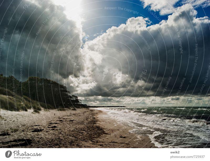 Wolken und Wellen Ferne Freiheit Umwelt Natur Landschaft Urelemente Sand Himmel Horizont Sonne Sonnenlicht Pflanze Sträucher Küste Strand Ostsee Weststrand