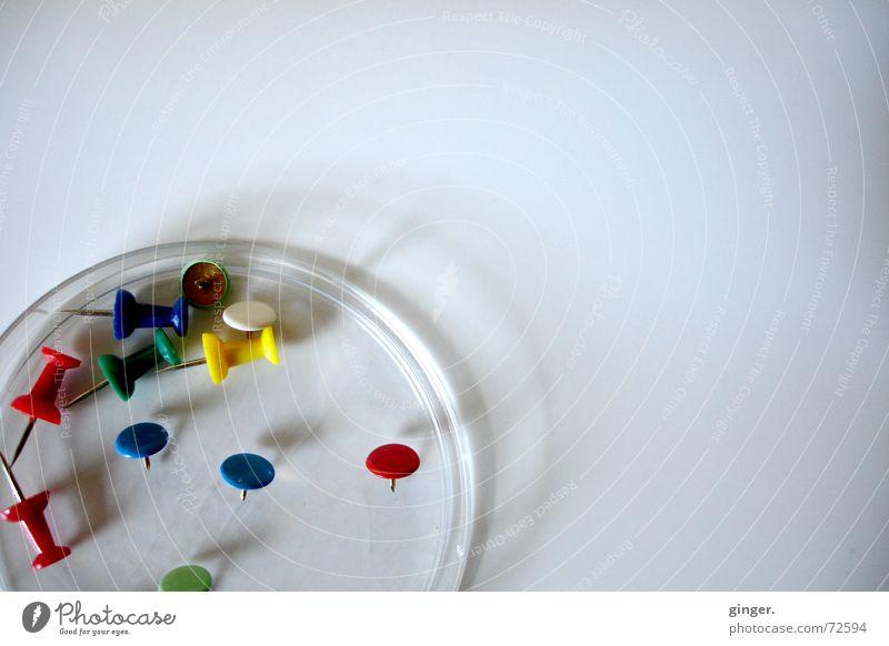 """""""petrischale"""" mit pins (2) Schalen & Schüsseln hell Farbe Stecknadel Petrischale liegen mehrere Hintergrund neutral Menschenleer Vogelperspektive befestigen"""