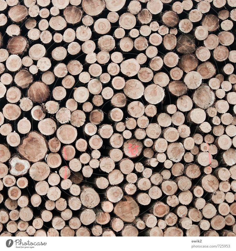 Schnittstellen Mauer Wand Holz liegen fest Zusammensein gigantisch groß hoch rund viele Kraft Verlässlichkeit Gelassenheit geduldig ruhig Ausdauer Ordnungsliebe