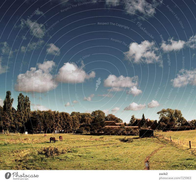 Ahrenshoop Umwelt Natur Landschaft Pflanze Tier Himmel Wolken Horizont Sommer Klima Wetter Schönes Wetter Baum Gras Wiese Weide Haus Lagerschuppen Pferd 2 3