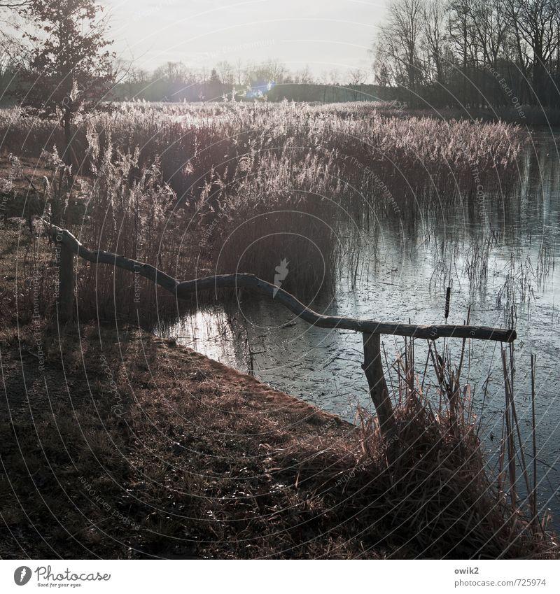Wassermusik Himmel Natur Pflanze Wasser Baum Landschaft Wald Umwelt Holz Horizont Wetter Idylle Sträucher Klima Schönes Wetter Urelemente