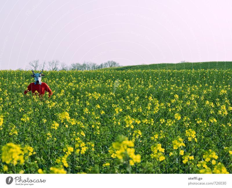 Weihnachtsmann setzt Rentier in Rapsfeld aus! Abenteuer Ferne Freiheit Mensch 1 Natur Landschaft Frühling Sommer Pflanze Feld Hirsche beobachten außergewöhnlich