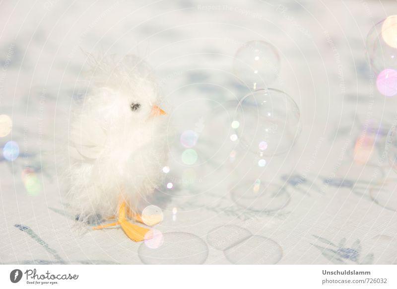 Happy Bird Day weiß Freude Tier gelb Tierjunges Stil klein Glück Feste & Feiern hell Vogel Lifestyle Kindheit Dekoration & Verzierung Geburtstag Fröhlichkeit