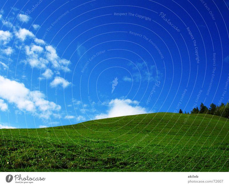 Teletubbies Wiese Gras grün Wolken ruhig Hintergrundbild Geborgenheit Erholung Außenaufnahme Natur blau Himmel Rasen Weide Wärme Fantasygeschichte