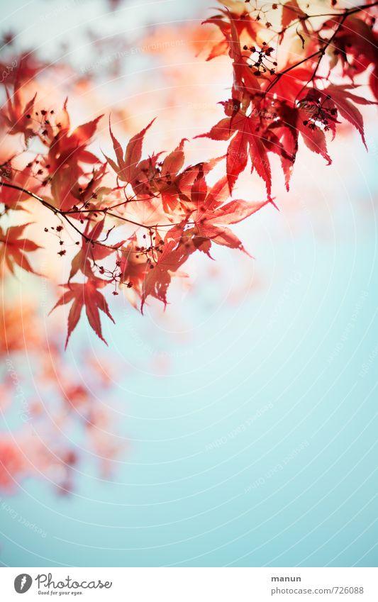 romantic spring Natur Frühling Sommer Herbst Pflanze Blatt Blüte Ahornzweig Ahornblatt natürlich rot türkis Frühlingsgefühle Leichtigkeit Farbfoto Außenaufnahme