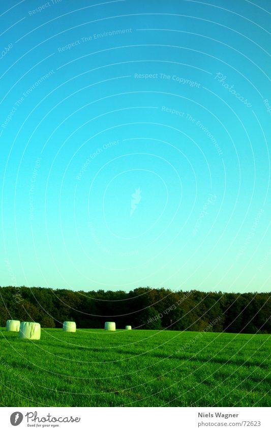 Blattgrün überall 3 Himmel Baum ruhig Wolken Wald Wiese Gras Feld Perspektive rund Kugel Statue Waldlichtung Heuballen