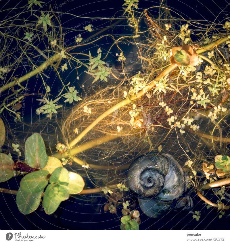 feuchter traum Natur grün Wasser Pflanze Tier gelb Frühling natürlich gold wild Dekoration & Verzierung ästhetisch nass Zeichen Gleichgewicht Teich