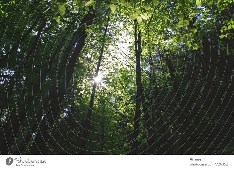 Photosynthese Natur Landschaft Pflanze Himmel Sonne Schönes Wetter Baum Laubbaum Buche Wald Laubwald Mischwald atmen genießen leuchten Wachstum Gesundheit hell