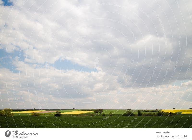 Rapsfelder im Frühling Wolken gelb grün Wiese Baum Farbfoto mehrfarbig Außenaufnahme Menschenleer Textfreiraum oben Tag Starke Tiefenschärfe Totale